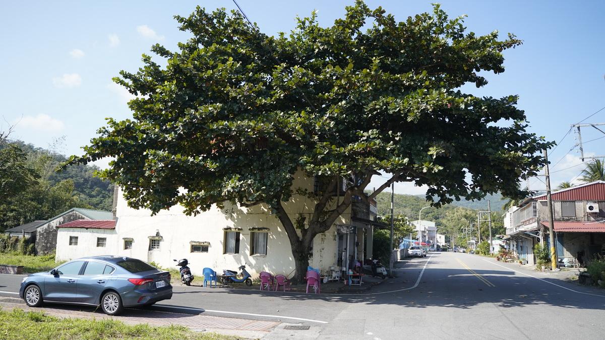 尚武劉台榮麵攤,顯眼的大葉欖仁樹作為招牌。